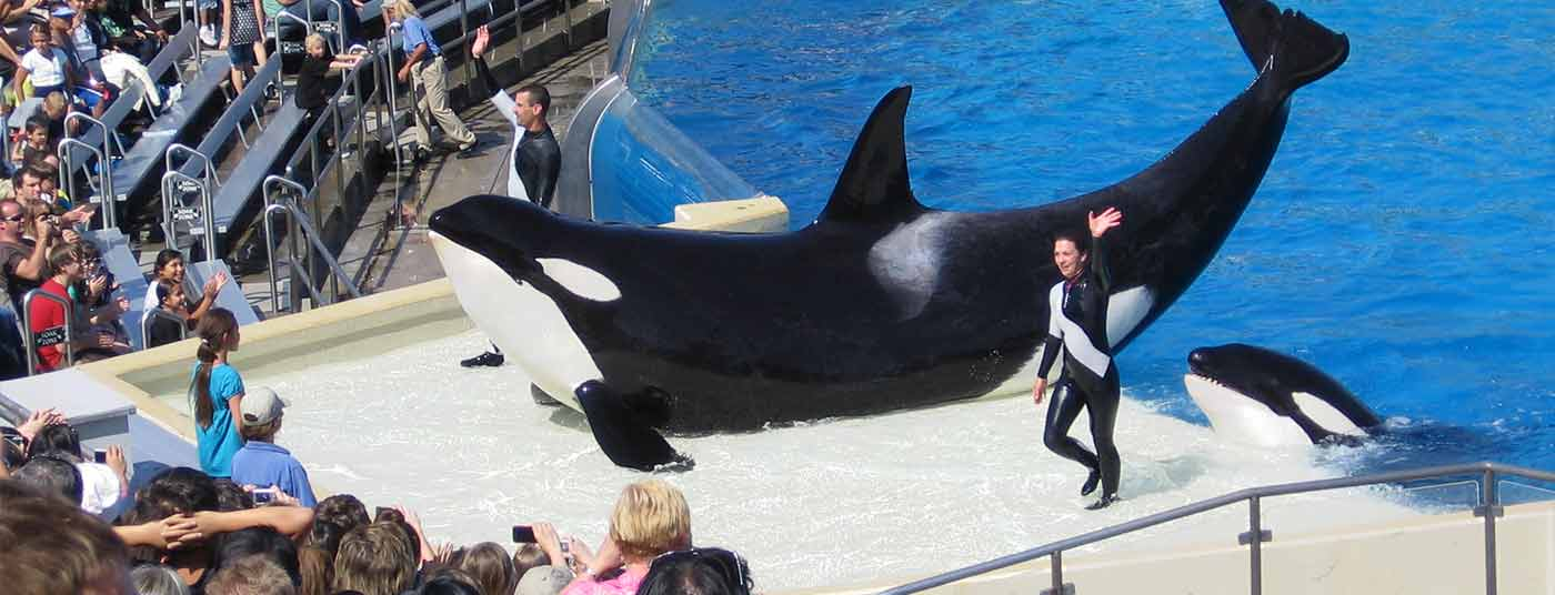 Visit SeaWorld San Diego only 2 miles away!